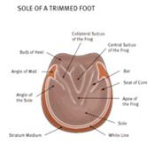 generalcare_footcare